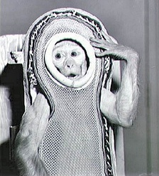 Sam, a rhesus macaque, flew to an altitude of 88 km (55 mi) in 1959 on a NASA rocket, Little Joe 2