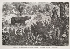 The ancient city of Chiang Saen with a rhinoceros roaming the ruins (Delaporte)
