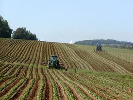 Картофельная нива Форт Фэйрфилд, штат Мэн, США