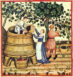 Pressing wine after the harvest; Tacuinum Sanitatis, 14th century