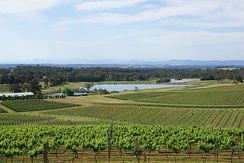 Vineyards in the Hunter Region