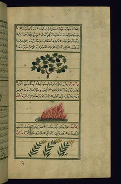 Illustration of an eggplant (upper picture) in a 1717 manuscript of a work by the thirteenth-century Persian Zakariya al-Qazwini.