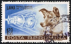 Laika on a Romanian post stamp