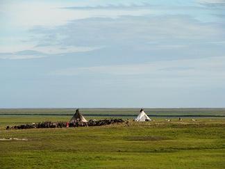Стойбище ненцев у реки Юрибей. Юго-западный Ямал.