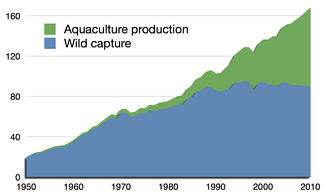 Global total wild fish capture and aquaculture production in million tonnes, as reported by the Food and Agriculture Organization