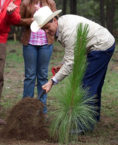 President Enrique Peña Nieto plants a tree in Balleza, Chihuahua to commemorate the Día del Árbol 2013.