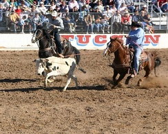 Team roping competition at Tucson's Fiesta de los Vaqueros