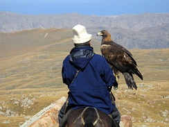 Hunting with an eagle