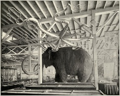 Mammoth and Giant Octopus, display at the Columbian World's Fair, 1893