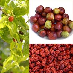 Ветка с плодами, зрелые свежие и сушёные плоды