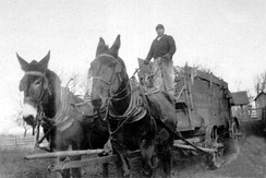 A farmer harvesting crops with mule-drawn wagon, 1920s, Iowa, USA