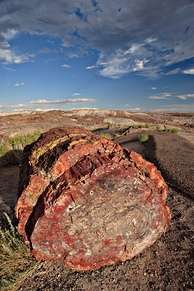 A petrified log in Petrified Forest National Park, Arizona