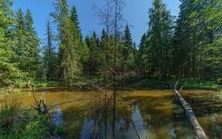 Лес в Валдайском национальном парке