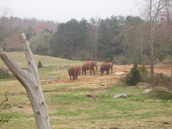 The African plains exhibit at North Carolina Zoo illustrates the dimension of an open-range zoo.