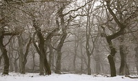 Three deciduous forests shown summer, autumn and winter