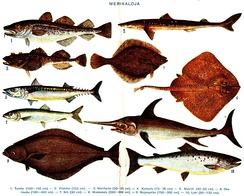 Display of about ten well-known saltwater fish