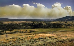 Wildfire in Yellowstone National Park produces a pyrocumulus cloud.