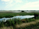 Assateague Wetlands.jpg