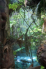 View of the Amazonian flooded forest in the rainforest exhibit. Arapaima, arowana, catfish, pacus, cichlids and other fish species can be seen from a submerged acrylic tunnel.[10]
