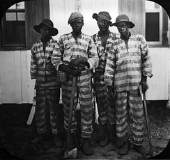 Convicts leased to harvest timber in Florida, circa 1915