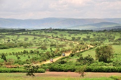 Agricultural fields in Rwanda's Eastern Province