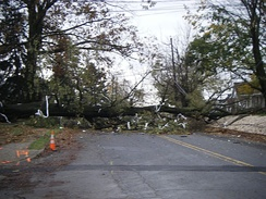 Downed tree in Kutztown, Pennsylvania