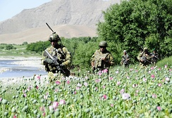 Australian and Afghan soldiers patrol the poppy fields in the Baluchi Valley Region, April 2010