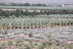 The Naute Fruit Farm at the Naute Dam outside of Keetmanshoop, Namibia