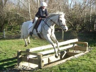 Тракененская лошадь на соревновании по троеборью.