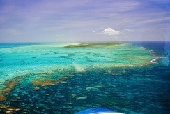 Coral reefs in the British Virgin Islands