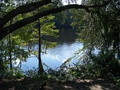 Suwannee River from the park
