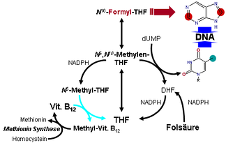 Metabolism of vitamin B12 is seen at bottom left.