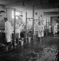 Some of the 60 tables, each staffed by two German doctors and two German nurses, at which the sick were washed and deloused, May 1–4, 1945