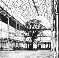 A tree enclosed within the Crystal Palace