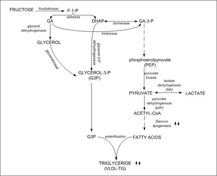 Figure 7: Metabolic conversion of fructose to triglyceride in the liver