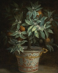 Jean-Baptiste Oudry, The Orange Tree, 1740
