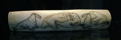 Engraving, made by Chukchi carvers in the 1940s on a walrus tusk, depicts polar bears hunting walrus