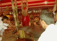 In Shaktism mythology, Durga slays an evil buffalo demon (left, 18th century statue).[86] Right: A buffalo about to be sacrificed by a villager during Durga puja festival. The buffalo sacrifice practice, however, is rare in contemporary India.[87]