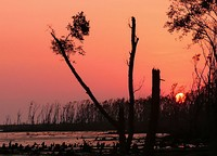 Sundarbans a few months after Cyclone Sidr