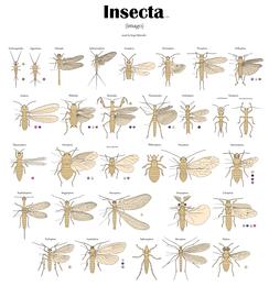 Все отряды насекомых. Имаго