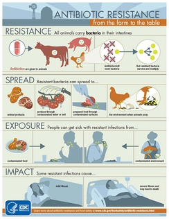 A CDC infographic on how antibiotic resistance spreads through farm animals.