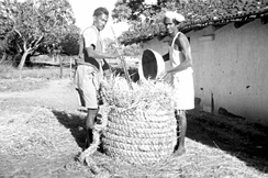 Workers storing rice in India in 1952