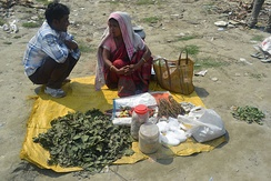 Woman selling cannabis and bhang in Guwahati, Assam, India.