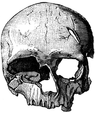 Cro-Magnon 2, the female skull found at Cro-Magnon (1884 drawing)
