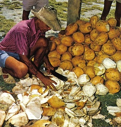 Cutting open young coconuts for drinking, Seychelles