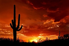 Saguaro at sunset from Saguaro National Park Rincon District