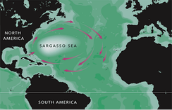 Approximate extent of the Sargasso Sea