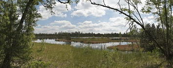 A raised bog kolk, the Wildsee, near Bad Wildbad in the Black Forest