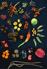 The diverse forest canopy on Barro Colorado Island, Panama, yielded this display of different fruit