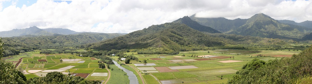A view of the Hanalei Valley in Northern Kauaʻi. The Hanalei River runs through the valley and 60% of Hawaiʻi's taro is grown in its fields.